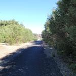 Tall heath beside path (250894)
