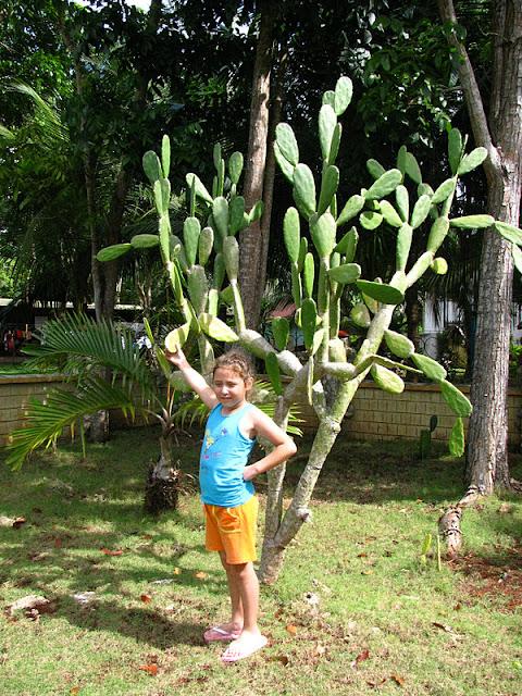 Из зимы в лето. Филиппины 2011 - Страница 3 IMG_0009%252520%2525282%252529