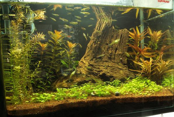 Aquariums plantés Aquarium+35+litres+n+1+13+02+2013