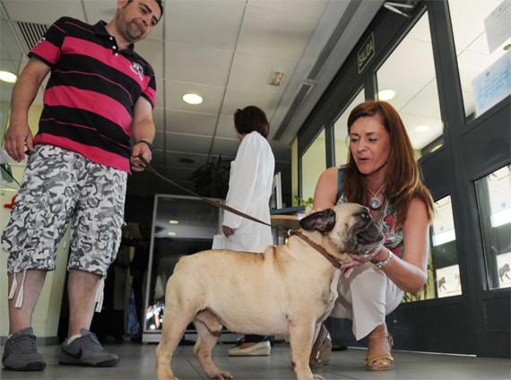 Adopta una mascota del Centro de Protección Animal del Ayuntamiento de Madrid