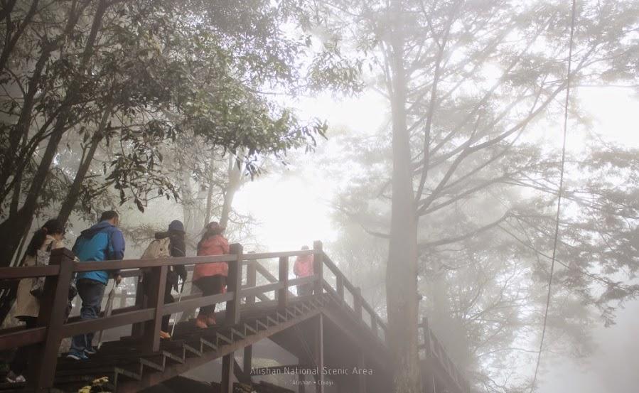 嘉義阿里山景點,巨木群棧道-9