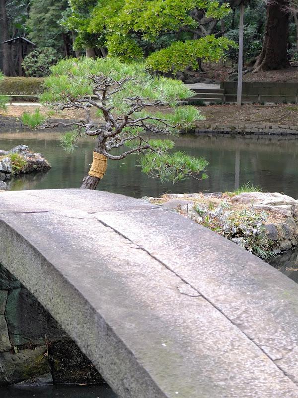 pikkupuu ja silta