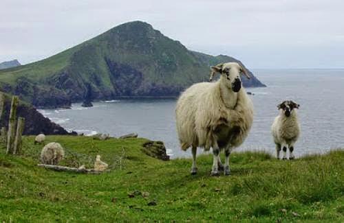 Encontros Cursos Irlanda Bolo Paranapipoca Wiccanique E Outros Bichos