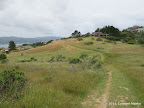 A trail in Old St Hilary's Open Space Preserve