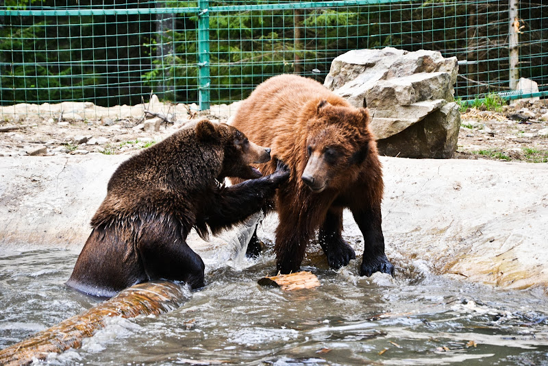 Картинки по запросу реабілітаційний центр ведмедів синевір