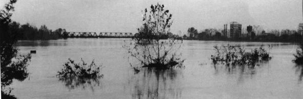 Alluvione del 1966 a San Donà. Foto di Angelino e Filiberto Battistella
