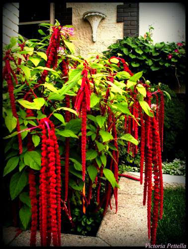 Adorned In Reds The Front Garden Of Goth