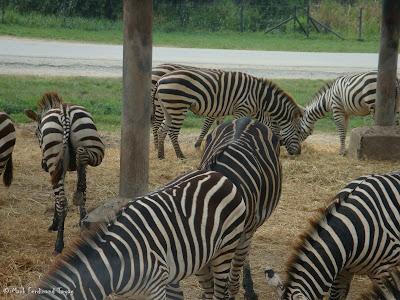 Safari World - Safari Park Bangkok Photo 5