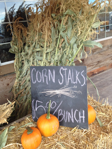 Corn stalks, farmers market