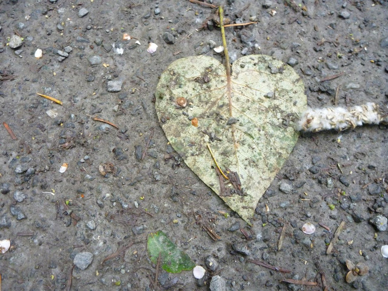 My Heart-shaped World: Heart-shaped Leaf at Elk Lake (Victoria, BC)