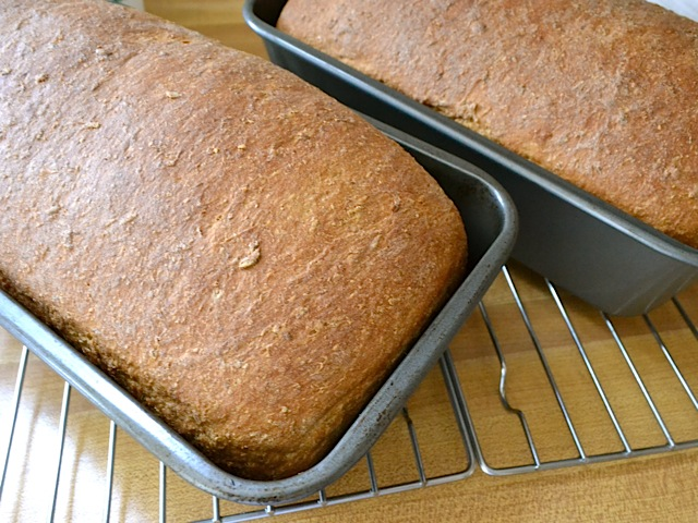 bake loaves oatmeal molasses bread