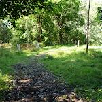 Shady trail north of Cedar Brush track head (365645)