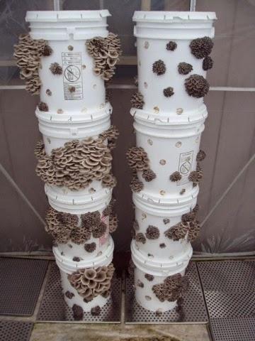 Gateway Garlic Urban Farms Stackable Mushroom Grow Tower