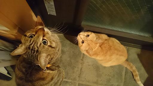 [写真]玄関ドアの前で出撃待ちの二匹