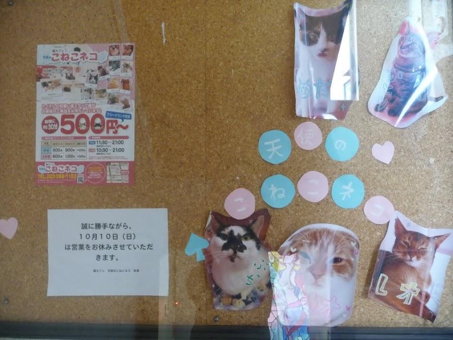 ねこカフェで猫っちゃおう!