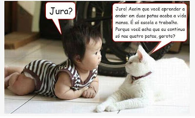 Sabedoria de Gato
