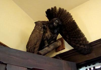 President Roosevelt Owl