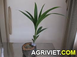 Agriviet.Com-t%25E1%25BA%25A3i_xu%25E1%25BB%2591ng_%25281%2529.jpg