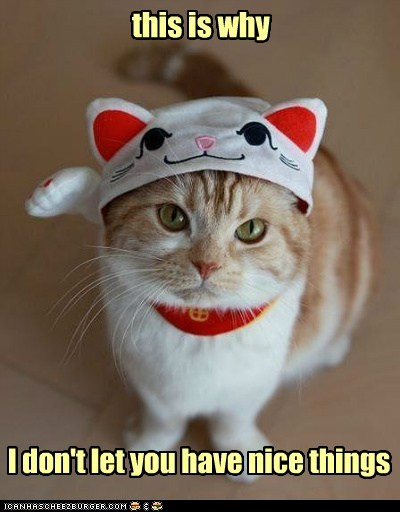 photo of cat wearing a funny costume