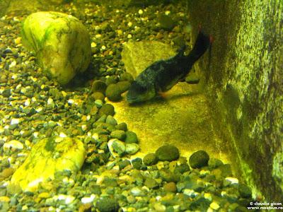 pesti la gradina zoologica: un peste ce muta pietre