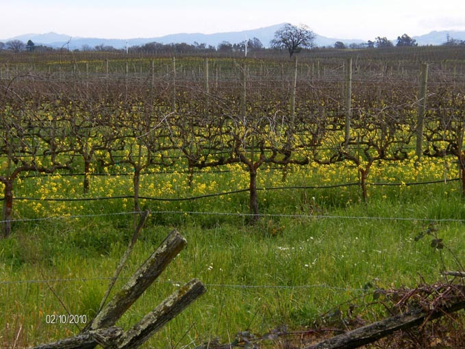 Bob on sonoma what time of year should you visit the wine for Best time to visit wine country