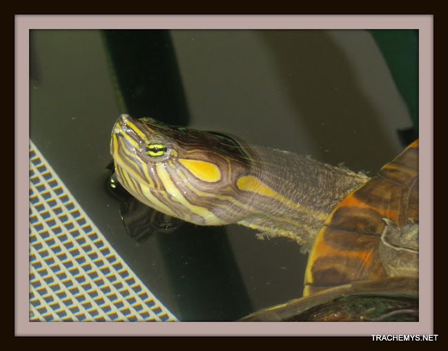 mes tortues (BK) - Page 10 IMG_2127