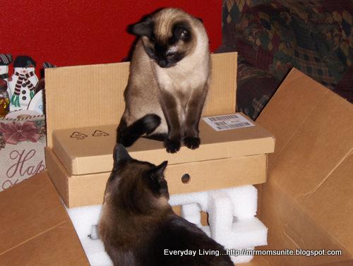 Photo of Koko and yum Yum sitting in a box