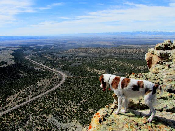 Torrey enjoying the view