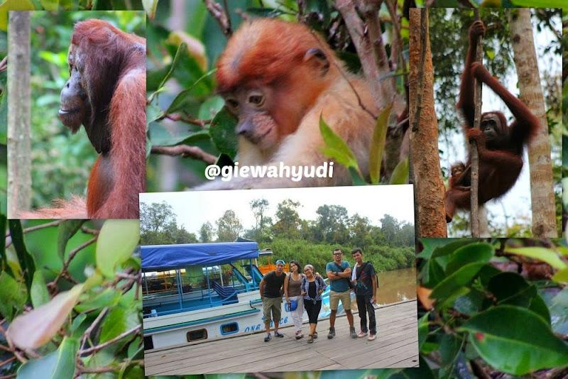 Tanjung Puting Menjadi Rumah bagi Orangutan dan Bekantan