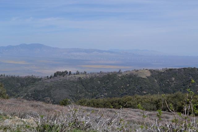 valley of windmills and orange splotches