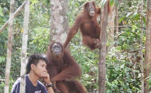 Tengkorak Orangutan Ditemukan di Kebun Sawit