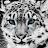 Lexi Duggar avatar image