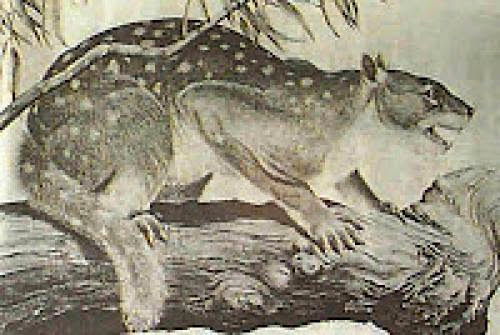 Fortean Oddball News Thylacoleo Roadkill Exorcists Wanted And Turkey Terror In Nyc