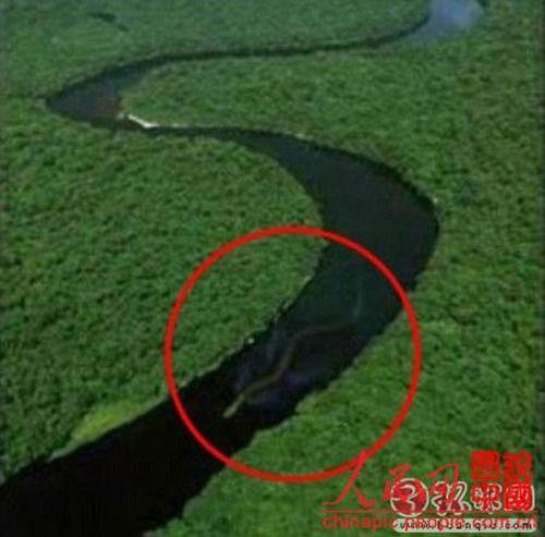 ¿ Serpiente gigante en Borneo: Real o Photoshop? Anaconda-gigante-en-rio-criptozoologia-paranormal