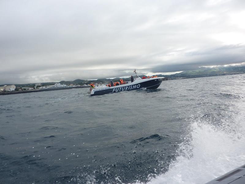 Açores- Natureza viva P1000477