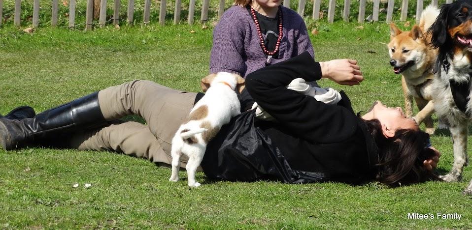 Balades canines en Nord (59)/Pas de Calais (62) - Boulogne-sur-Mer, Calais et Lille - Page 4 DSC01933-001