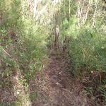 Track above Campfire Ck (145209)