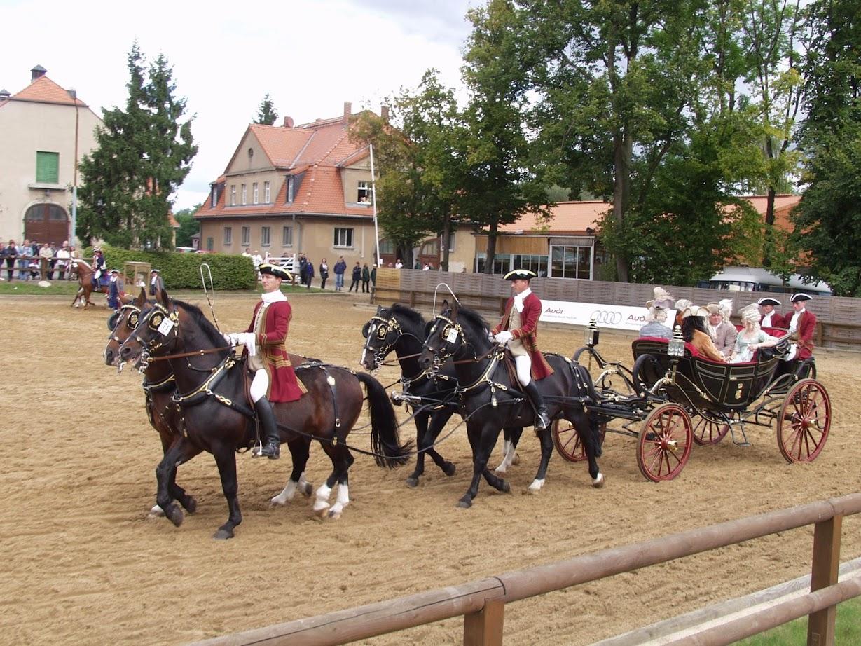 Königliche Kutsche bei der Hengstparade Moritzburg