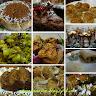 Mukulika Sengupta food blogger
