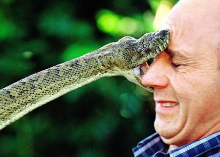Vá discutir com uma cobra para ver o que ela fará com você...