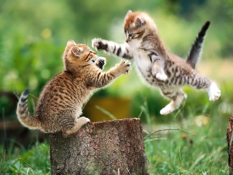 gambar kucing unyu-unyu gambar unyu-unyu terbaru gambar lucu anak