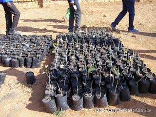 Pépenière du projet agroforestier de Mukoma au Katanga financé par l'Union européenne (Juillet 2014)