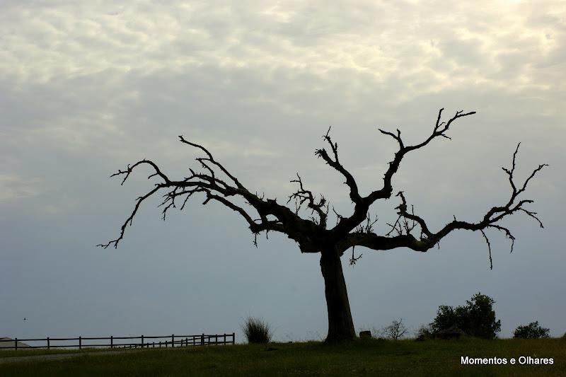 Árvore no Alentejo, Cunheira