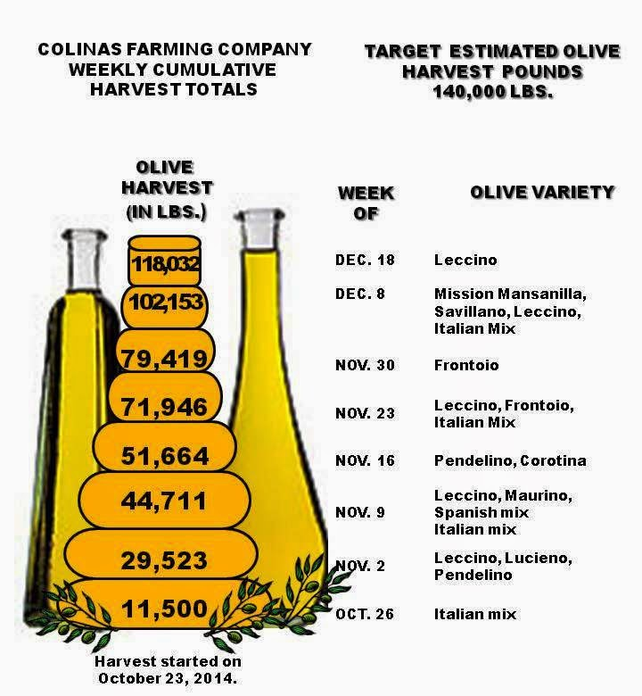 Final Cumulative Weekly Olive Harvest Total