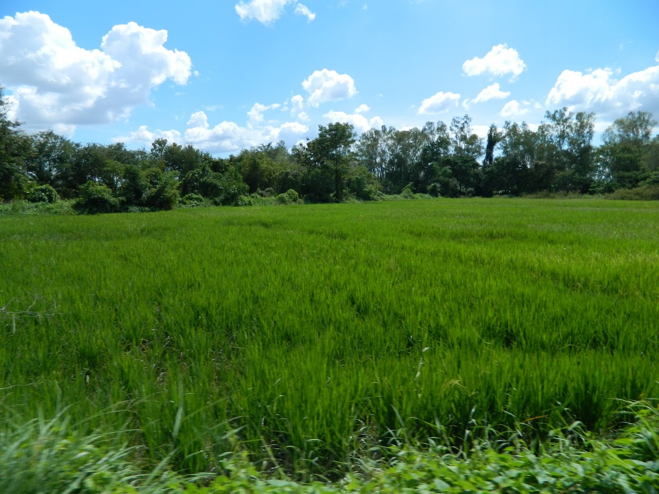 More Than a Rice Paddy