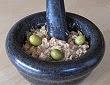 Creme de thon aux capres et aux olives