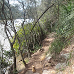 following berowra creek (71389)