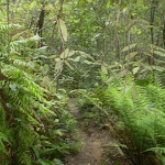 The ferns and temperate rainforest next to Denfenella Crk (7604)