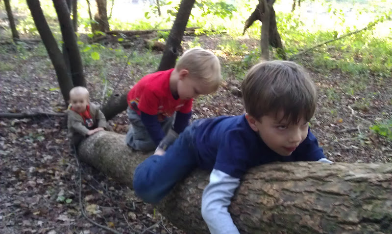 The boys climbing a tree at Chattahoochee Bend SP