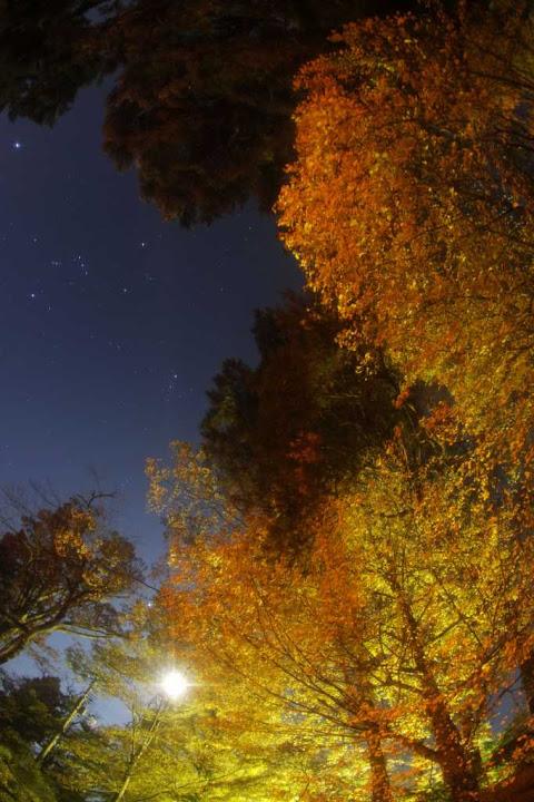 被曝地FUKUSIMAの星空(1)